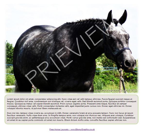 Dappled Grey Horse